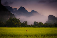 Beautiful Mist (Dan Ballard Photography) Tags: world travel favorite mist mountain storm man mountains color dan nature water beautiful clouds rural landscape photography amazing asia gallery photographer rice photos pics outdoor spirit top magic great harvest best east vietnam explore photograph walkway stunning fields prints ballard lightning portfolio pick wonderland irrigation sapa cloudscapes paddies gallary photograpy outdoorphotographer coloradophotographer danballard danballardphotography danballardphotogarphy terrices riceterrices
