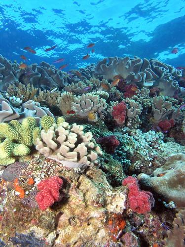 ocean coral reef noaa