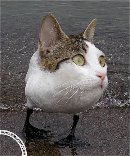 catguin