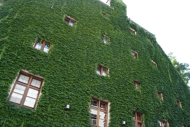 leaf covered building