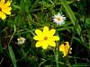 Wildflowers in Haskell-Baker Wetlands, Lawrence, Kansas (danjdavis) Tags: lawrence wetlands kansas wildflowers haskellbakerwetlands wakarusawetlands
