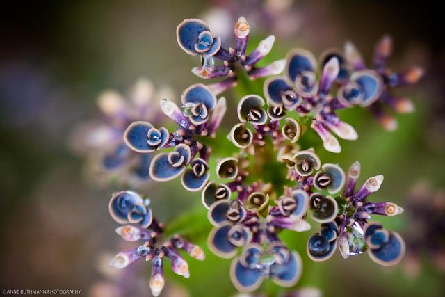 Flora in Australia