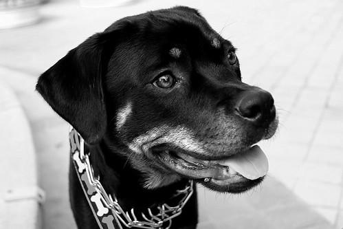 Ilsa in Black and White