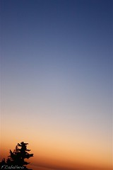 Atardecer minimalista (F.Caballero // Fat64) Tags: blue red sky orange tree sunshine azul arbol atardecer rojo fat colores cielo easy minimalism minimalismo pino naranja ocaso tone fatima caballero tono minimalista composicin degradado sencillo sencillez mywinners fat64