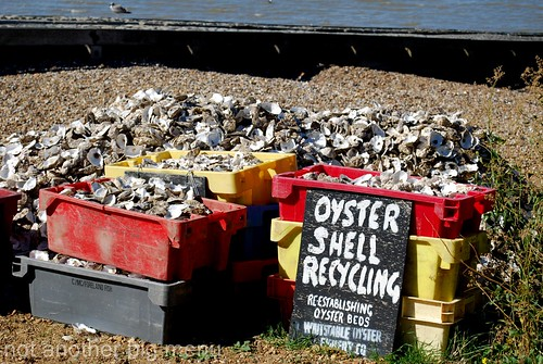 Oysters for recycling