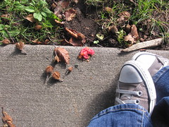 park feets (Heather Quintal) Tags: chucks kerryparkqueenanneseattle