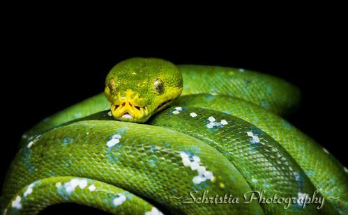 green reptile snake