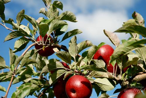 Apples Sky3