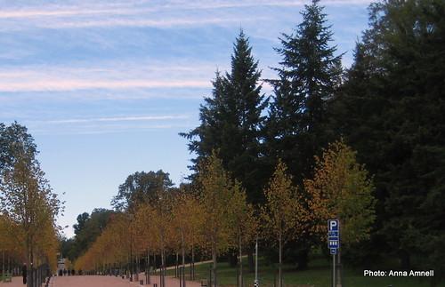 Syyskuu 2010 uudet puut by Anna Amnell