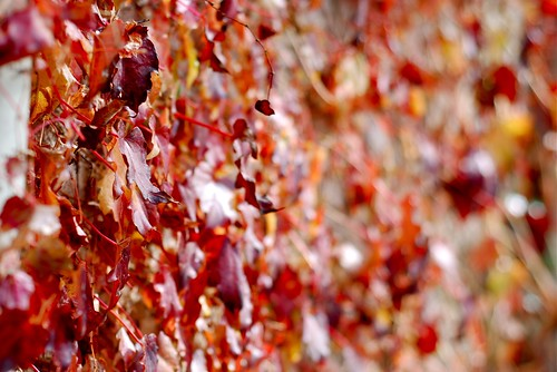 fall, last year