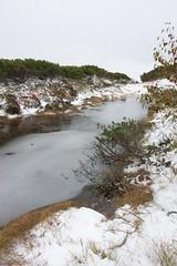 凍る神ノ田圃