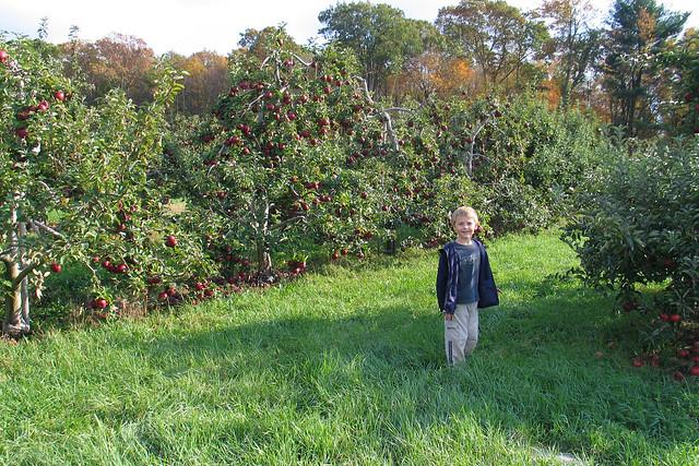 Apple Orchard 01