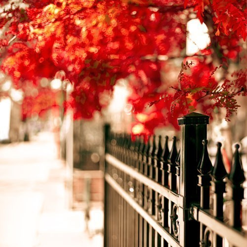 Scarlet Autumn - a fine art nature photography print (8x8)