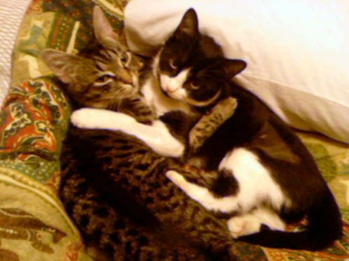 cute cat cuddling