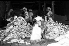Packing salt (QooL / بنت شمس الدين) Tags: travel workers factory salt packaging m3 laos qool 0014 banboe qoolens