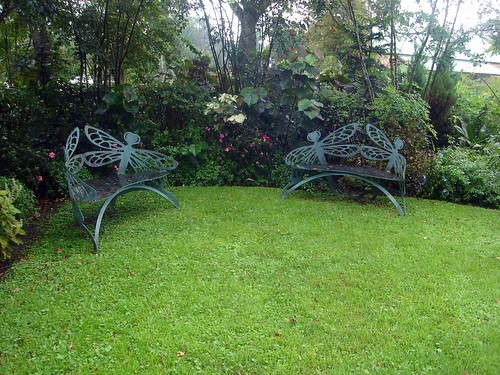 Dragonfly Chairs