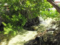 Baha de Chetumal (Juan_Chanclas) Tags: mexico mar selva playa quintanaroo baha bahadechetumal vegetacn