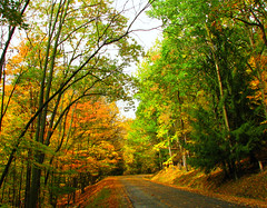 Autumn Road (Colorado Sands) Tags: road autumn trees usa color fall colors leaves wisconsin america forest us woods midwest arboles unitedstates branches herbst herfst colores foliage american  amerika autunno bume autumnal outono rvores countryroads fogliedautunno wausau pokok midwestern sonbahar efterr lautomne autunnale bumen sandraleidholdt elotoo  coloresotoales leidholdt sandyleidholdt