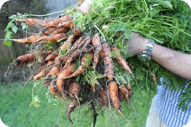 carrot anyone?