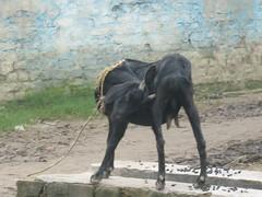 IMG_6822 (vijay.image) Tags: mera gaon vijayimage