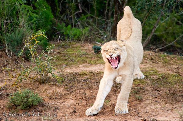 RYALE_SA_National_Park_Addo_90