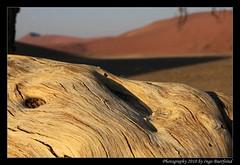 2010-08-12 08-24-44_DxO_post2_copy (ibuerfei) Tags: africa park sun sand desert south dune 45 safari national cape nomad rise namibia bume dne wste kruger 2010 morgens namib naukluft