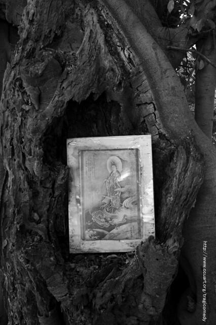 tree(bodhisattva)-05