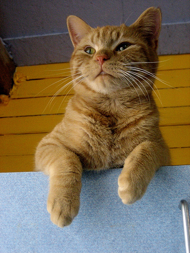 cute rescued ginger cat