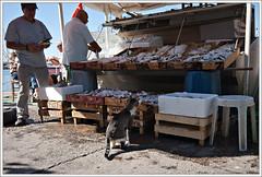 Irresistible (kceuppens) Tags: fish cat turkey harbour nikond50 turkije bodrum sigma1020