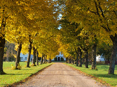 The Entrance (Peter Nyhln) Tags: autumn sweden olympus autumnleaves autumnleaf e520 zuiko1442mm olympuse520 100commentgroup kinnahult peternyhln