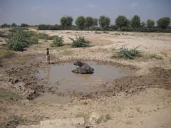 rotary-rain-water-harvesting-214