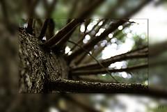 Villach:captured photowalk11 (wigerl - herwig ster) Tags: autumn brown tree fall herbst braun baum gest vassachersee vcphotowalk11