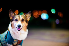 drive at night (moaan) Tags: leica travel light dog travelling night digital 50mm drive corgi driving dof bokeh weekend f10 utata noctilux welshcorgi 2010 m9 servicearea talelight pochiko leicanoctilux50mmf10 leicam9 gettyimagesjapanq1 gettyimagesjapanq2