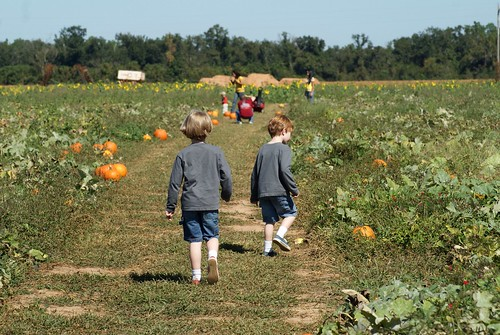 Holland Farms Pumpkin Patch