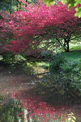 colourful reflection (grannie annie taggs) Tags: park pink reflection water reflexions
