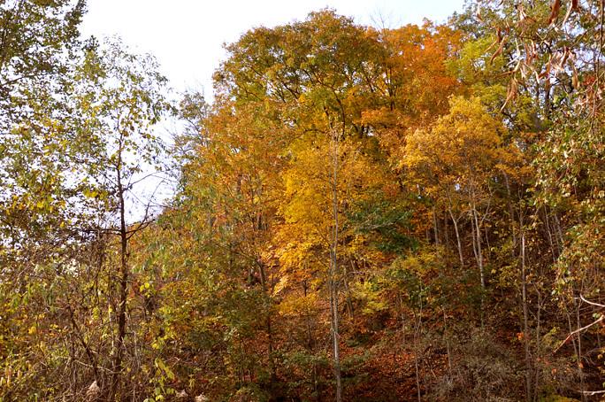 fall walk39