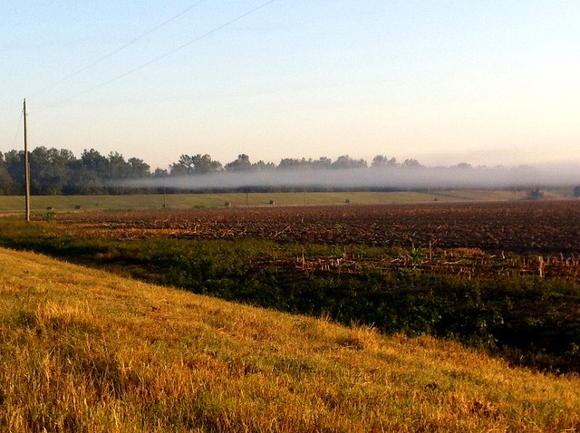 Mist rising over the fields
