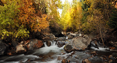 american fork river fall 2010 17th of October (houstonryan) Tags: autumn motion blur art fall water colors leaves speed river print photography utah moving october stream slow time ryan vibrant houston fork canyon photograph american greens shutter oranges yellows reds brilliant elapse houstonryan