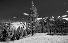 Pine Tree and Valley (B&W)
