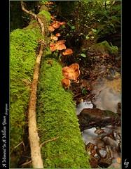 A Moment In A Million Years (kgorka) Tags: water rio canon river agua sigma otoño kata 1020 seta bizkaia manfrotto polarizador muskiz profundidad micologia eos7d gorkabarreras