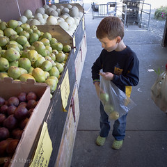 Lewis picking out pears