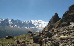 Grazing with a view (TomLiaPhotography) Tags: mountains alps sheep chamonix