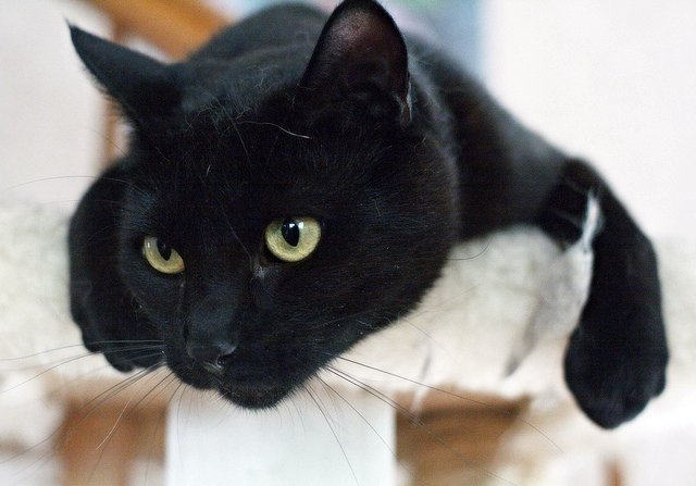 cute rescued black cat