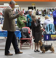 Under Judge Jon Cole, Best Opposite Sex at the 2010 Australian Terrier Specialty weekend!