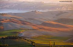 Tuscany lands (lucagiustozzi.com) Tags: tuscany valdorcia cretesenesi sienatuscany