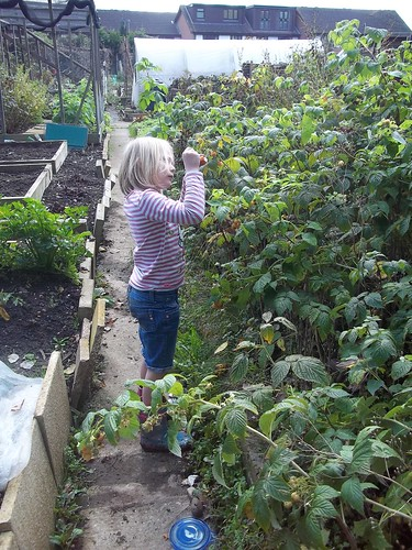 S picking raspberries
