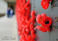 Remembrance (Grum(by)) Tags: red memorial war remember poppy canberra remembranceday remembrance anzac sacrifice armisticeday armistice
