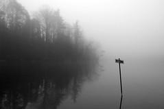 No Fishing (Part 2) (ICT_photo) Tags: morning mist lake fish sign fog pond foggy nofishing ictphoto ianthomasguelphontario