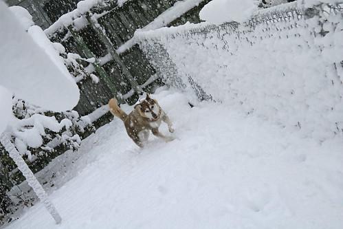 first snow3