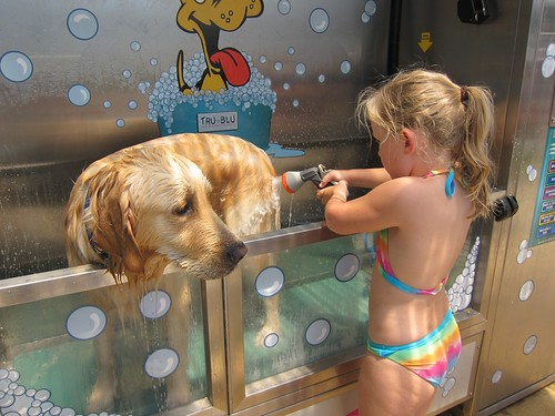 A visit to the dog bath